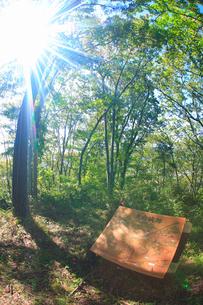 天白城跡と木もれ日と解説板の写真素材 [FYI02645990]