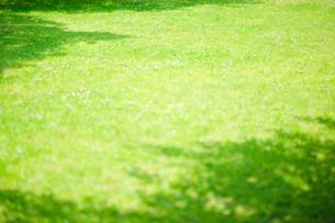 芝生の写真素材 [FYI02646179]