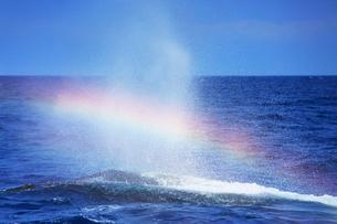 ザトウクジラのレインボーブロウの写真素材 [FYI02646401]