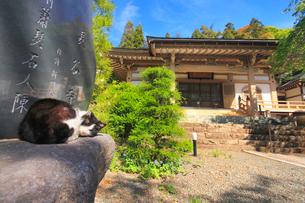長谷寺本堂と眠る猫の写真素材 [FYI02646450]
