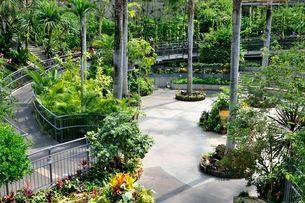 とっとり花回廊 園内フラワードーム観葉植物の写真素材 [FYI02646772]