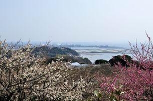 綾部山梅林からたつの平野を見るの写真素材 [FYI02646869]