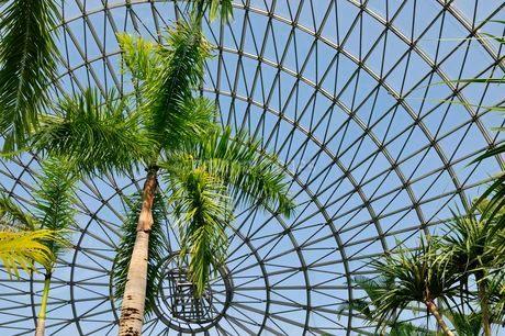 とっとり花回廊 フラワードーム内のヤシの木の写真素材 [FYI02646873]