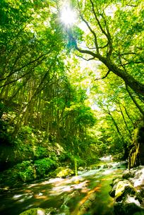 横川渓谷・新緑映す横川の清流の写真素材 [FYI02646940]
