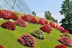とっとり花回廊 園内フラワードームの写真素材 [FYI02646988]