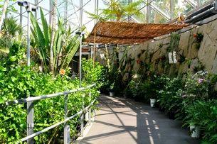 とっとり花回廊 フラワードーム内観葉植物の写真素材 [FYI02647054]