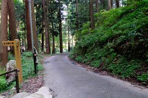 水の森瓜割の滝山道風景の写真素材 [FYI02647074]