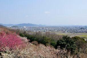 綾部山梅林からたつの平野を見るの写真素材 [FYI02647091]