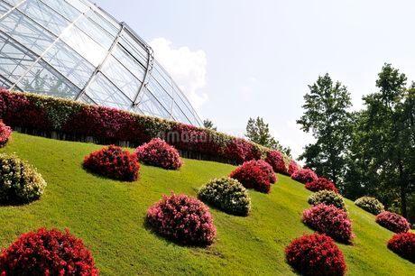 とっとり花回廊 園内フラワードームの写真素材 [FYI02647099]