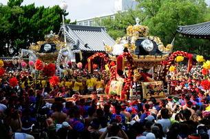 松原八幡宮境内にて灘けんか祭りの写真素材 [FYI02647126]