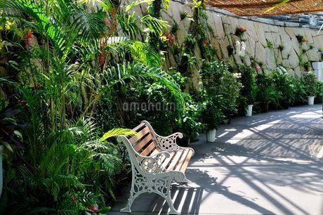 とっとり花回廊 フラワードーム内観葉植物の写真素材 [FYI02647157]
