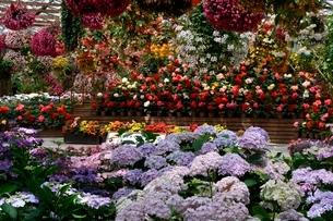 松江 フォーゲルパーク園内のセンターハウスの花の写真素材 [FYI02647185]