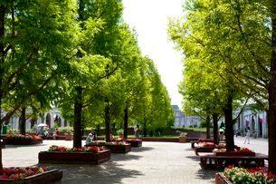 神戸フルーツ・フラワーパークの園内の写真素材 [FYI02647227]