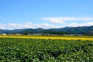 丹波コシヒカリと黒豆栽培の写真素材 [FYI02647262]
