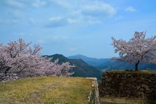 桜咲く竹田城跡 北千畳の写真素材 [FYI02647362]