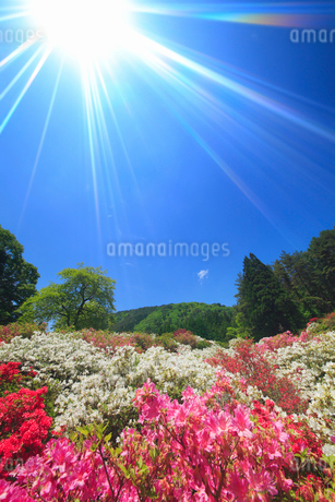 ツツジと女神岳と太陽と木立の写真素材 [FYI02647365]