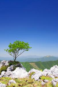 四国カルスト姫鶴牧場の石灰岩群と木立と石鎚山遠望の写真素材 [FYI02647381]