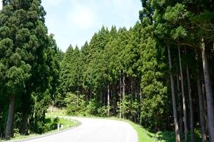 別宮 杉林と県道の写真素材 [FYI02647388]