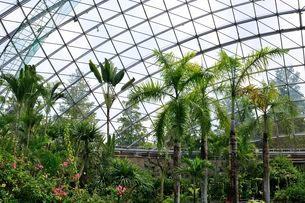 とっとり花回廊 園内フラワードームとヤシの木の写真素材 [FYI02647511]