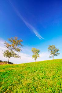 竜頭の里の芝生の丘と木立の写真素材 [FYI02647721]