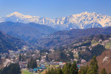 山桜と蓮華岳と爺ヶ岳の写真素材 [FYI02647732]