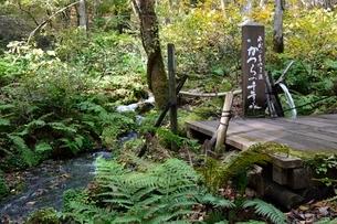 紅葉,但馬高原植物園,かつらの千年水の写真素材 [FYI02647956]