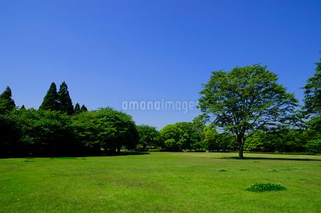 新緑の昭和の森公園の写真素材 [FYI02648213]