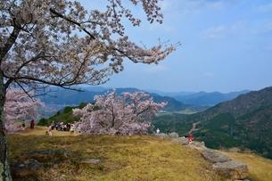 桜咲く竹田城跡 北千畳の写真素材 [FYI02648324]