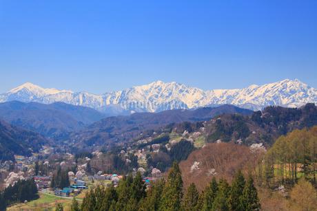 山桜と蓮華岳と爺ヶ岳と鹿島槍ヶ岳の写真素材 [FYI02648387]