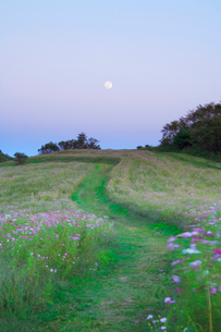 コスモス畑と中秋の名月の写真素材 [FYI02648443]