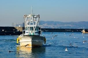 神戸 垂水漁港 イカナゴ漁船が帰るの写真素材 [FYI02648489]
