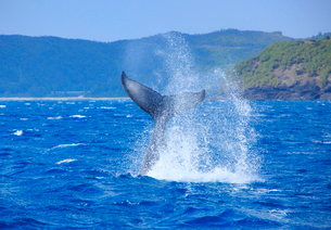 ザトウクジラのテールスラップと座間味島の写真素材 [FYI02648493]