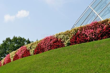 とっとり花回廊 園内フラワードームの写真素材 [FYI02648511]