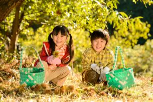 拾った栗を見せる女の子と男の子の写真素材 [FYI02648662]