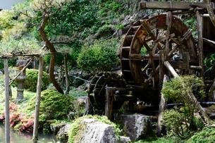 史跡,生野銀山,生野代官所内の池の写真素材 [FYI02648713]