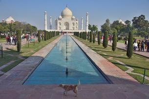 タージ・マハールの建造物群の中の墓廟と犬の写真素材 [FYI02648723]