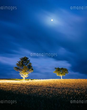 小麦畑と木立と月ライトアップ ホクシンの写真素材 [FYI02649064]