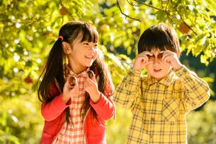 拾った栗で遊ぶ女の子と男の子の写真素材 [FYI02649287]