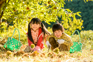 拾った栗を見せる女の子と男の子の写真素材 [FYI02649289]