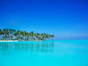 青い海とヤシの木の写真素材 [FYI02649510]