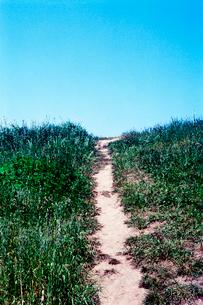土手に上がる細い坂道の写真素材 [FYI02649514]