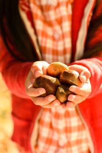 拾った栗を見せる女の子の写真素材 [FYI02649551]