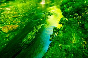 横川渓谷・新緑映す横川の清流と蛇石の写真素材 [FYI02649585]