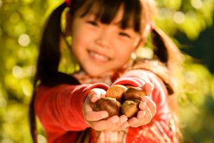 拾った栗を見せる女の子の写真素材 [FYI02649605]