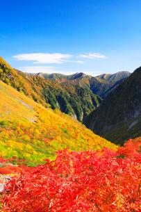 ナナカマドの紅葉と東大天井岳の写真素材 [FYI02649742]