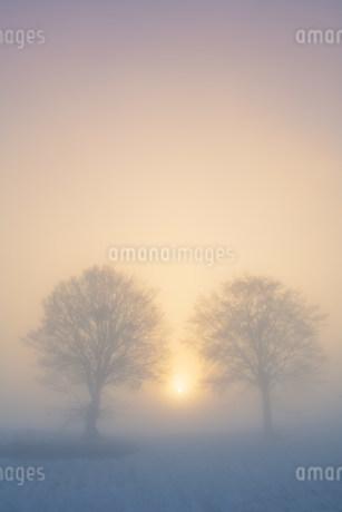 朝霧のブナ木立の写真素材 [FYI02649821]