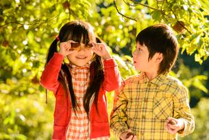 拾った栗で遊ぶ女の子と男の子の写真素材 [FYI02649945]