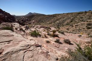 地層と色々な色の岩山が並ぶレットロックキャニオン国立保護区の写真素材 [FYI02650074]