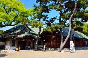 新緑 住吉大社 神楽殿の写真素材 [FYI02650106]