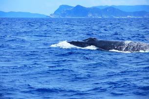 ザトウクジラと阿嘉島の写真素材 [FYI02650281]